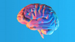 Digital Neuromarketing, la neuroscienza applicata nella comunicazione   Libellula Grafica Lab